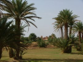Beautiful and tranquil Oued Driss oasis near Mhamid, one of the the last outposts in the Moroccan Sahara